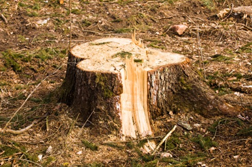 Benefits To Removing Stumps From Your Property