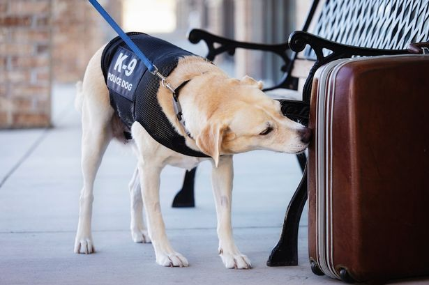 Sniffer Dogs A Vital Part Of Trading Standards Teams