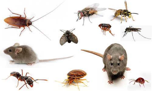 Landlords Who Ignore Pest Problems May Lose Rent