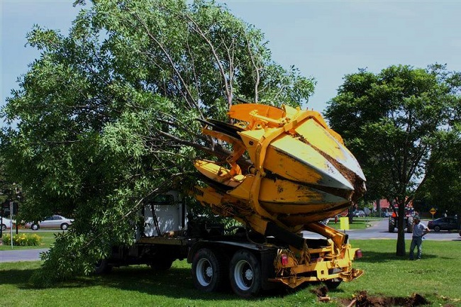 5 important DIY Tree Removal Steps For Smaller Trees – Without Killing The Same
