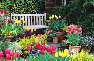 Let's Make Your Garden More Beautiful In This Spring