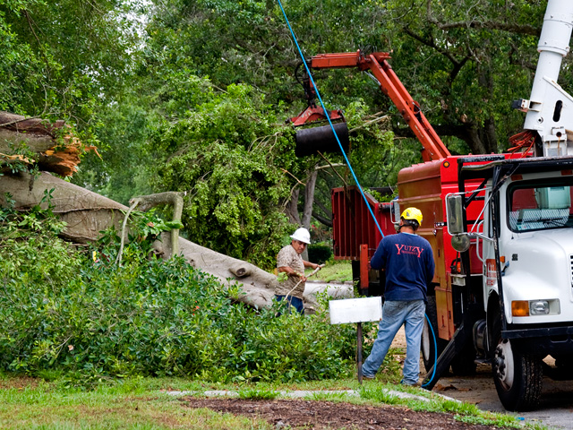 Options For Tree Service