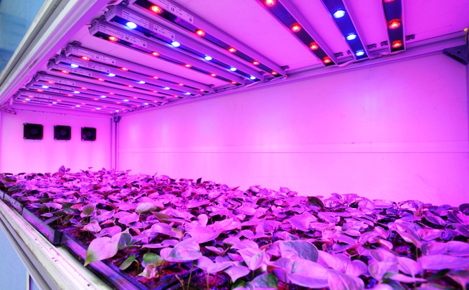 3 Most Important Things About LED Grow Lights