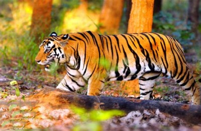 Sundarban National Park- Largest Tiger Reserve In India