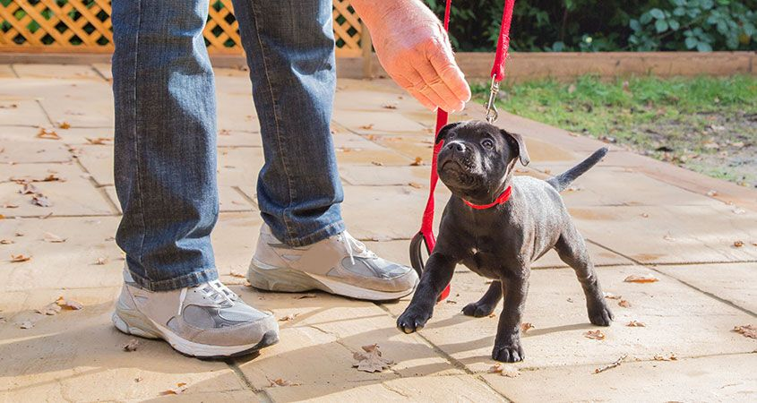 The Best Behaved Dogs Start With Professional Puppy Training1