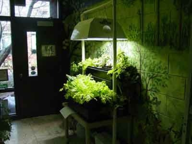 4 Tips To Consider For Setting Up Your Indoor Garden